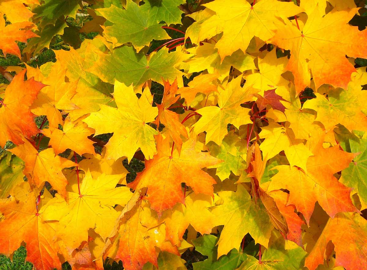 fall_autumn_leaves