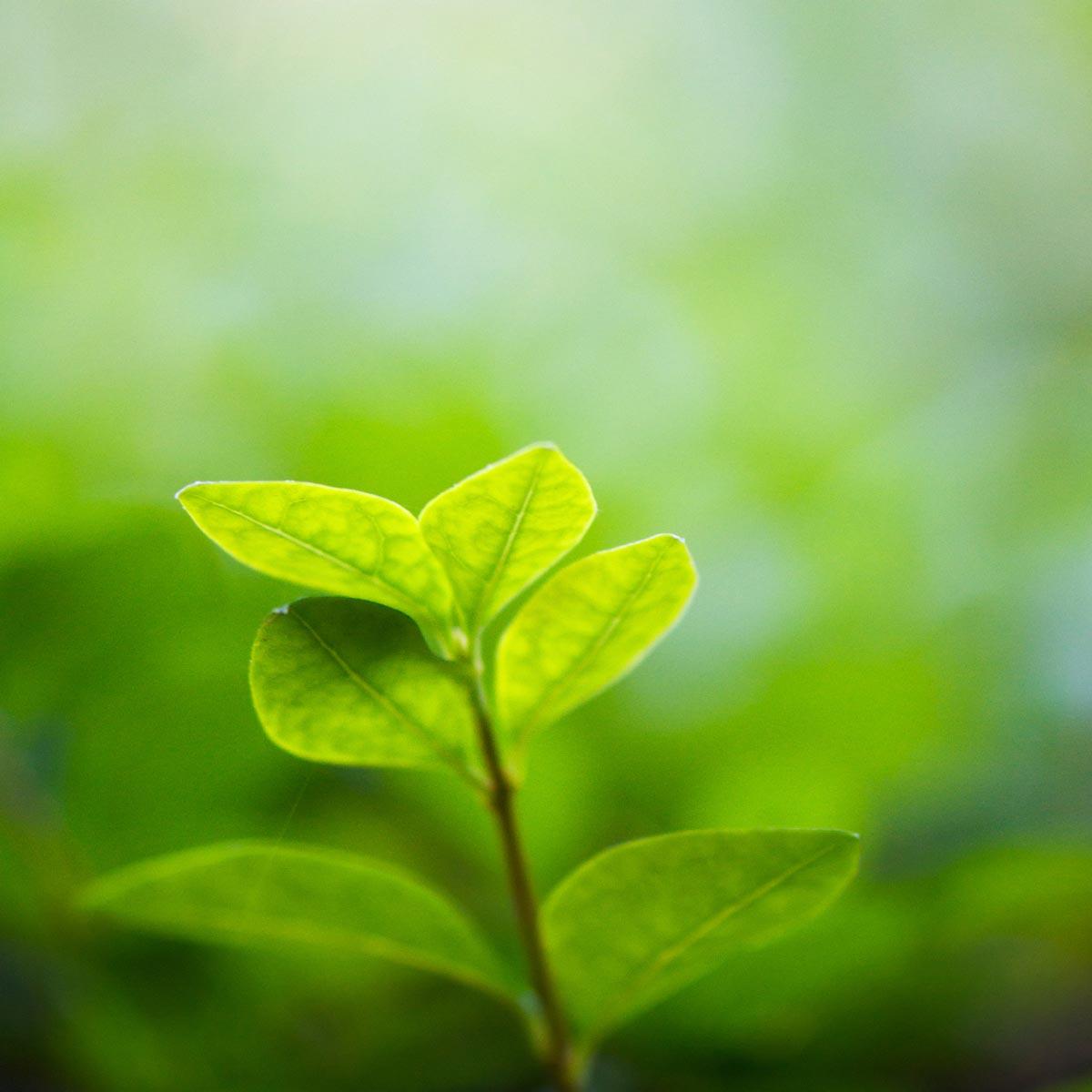 leaf-background